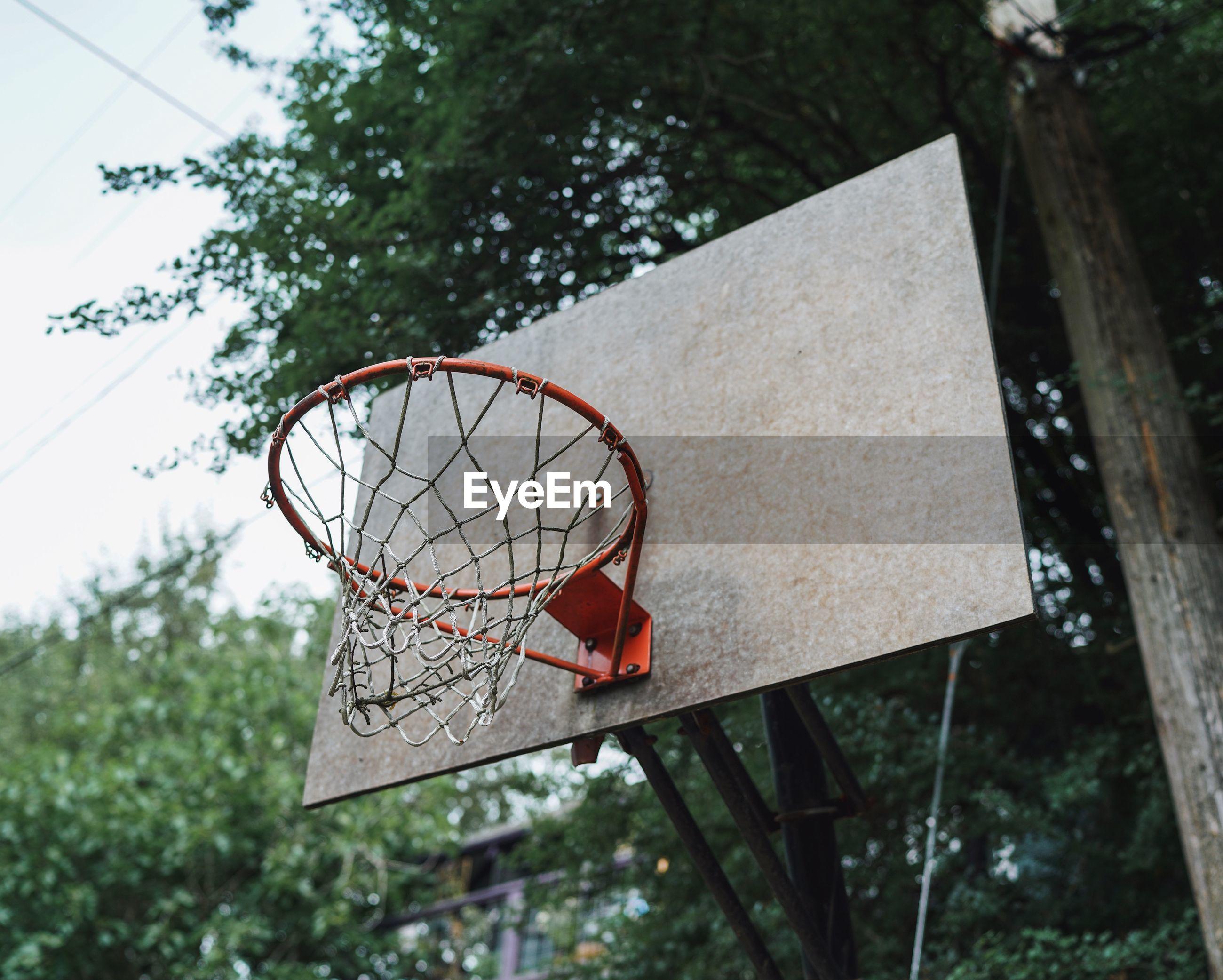 LOW ANGLE VIEW OF BASKETBALL HOOP ON TREE
