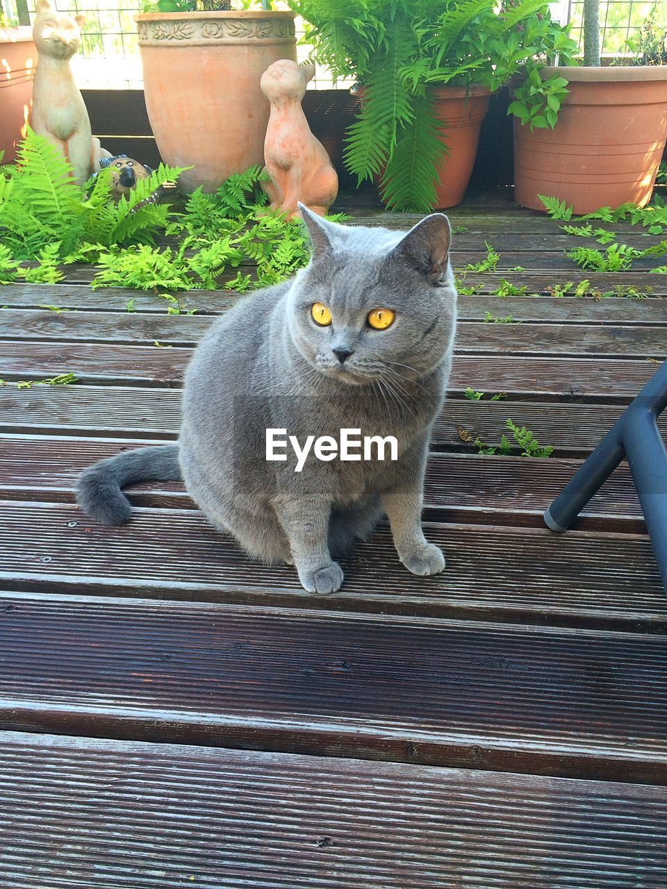 Gray cat on patio