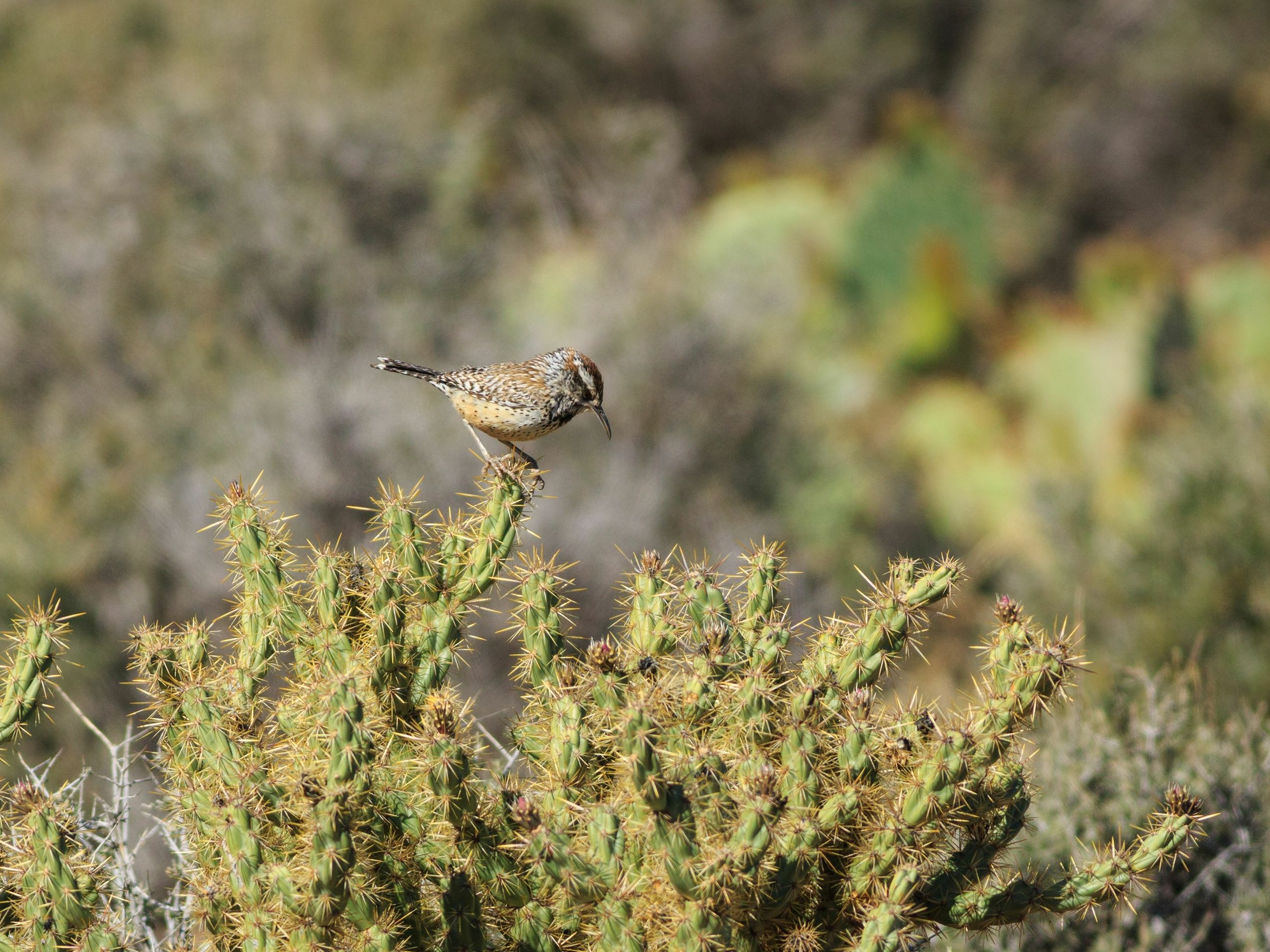 Close-up of bird on cactus