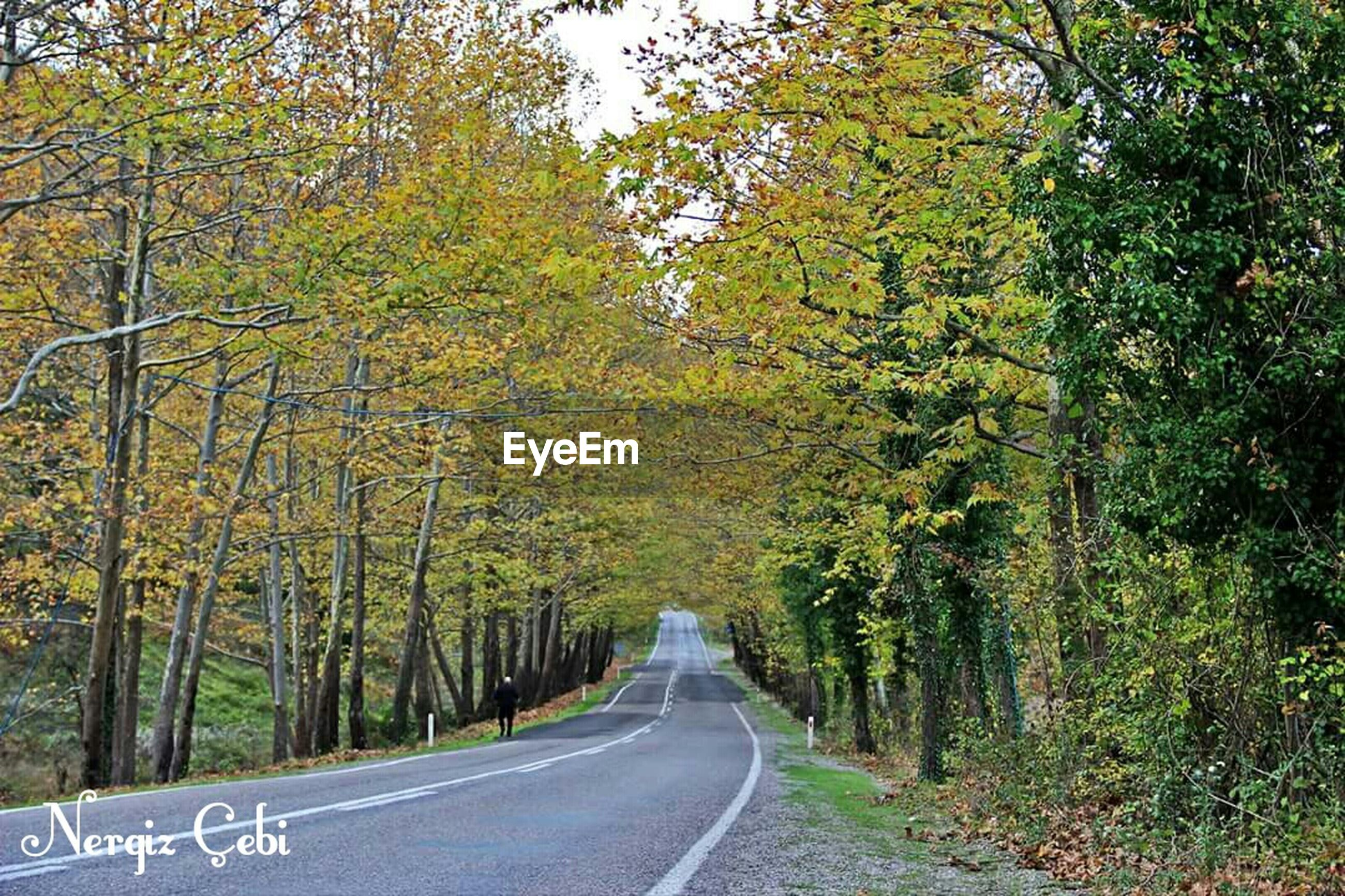 tree, the way forward, transportation, road, diminishing perspective, vanishing point, growth, treelined, nature, empty road, road marking, branch, tranquility, country road, street, day, beauty in nature, green color, forest, outdoors
