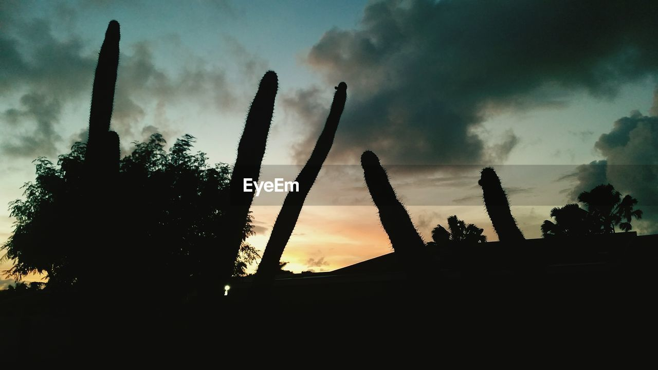 cloud - sky, sky, silhouette, sunset, cactus, growth, low angle view, no people, outdoors, nature, beauty in nature, saguaro cactus, tree, day