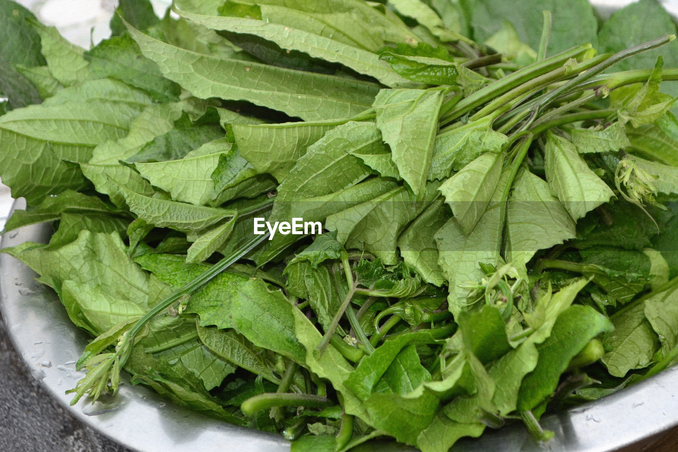 HIGH ANGLE VIEW OF GREEN LEAVES IN PLATE