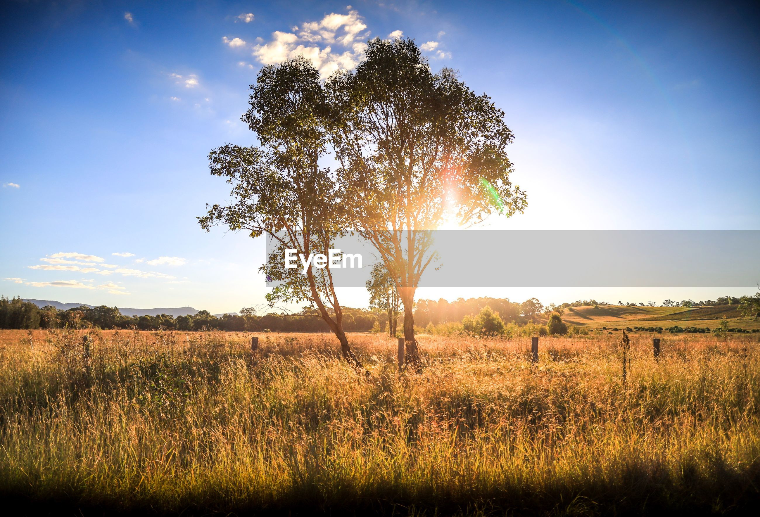 TREES ON FIELD AGAINST BRIGHT SKY