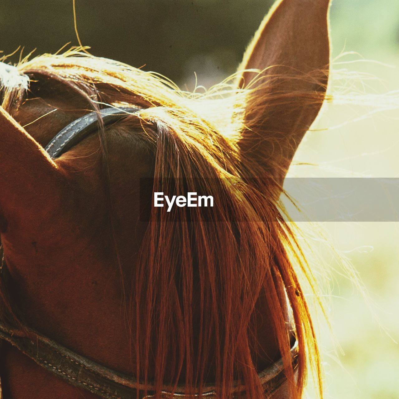horse, one animal, domestic animals, mammal, animal themes, close-up, brown, day, outdoors, no people