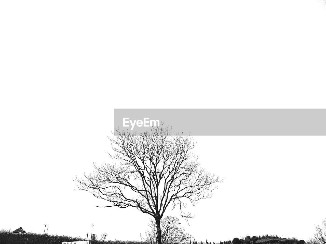 bare tree, tree, branch, tranquility, clear sky, scenics, lone, beauty in nature, nature, tree trunk, tranquil scene, isolated, landscape, outdoors, day, low angle view, no people, sky