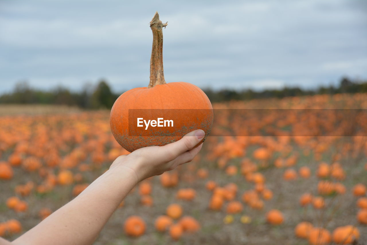 human hand, hand, orange color, holding, human body part, focus on foreground, real people, one person, food, unrecognizable person, food and drink, pumpkin, nature, day, plant, close-up, freshness, body part, lifestyles, field, finger, human limb