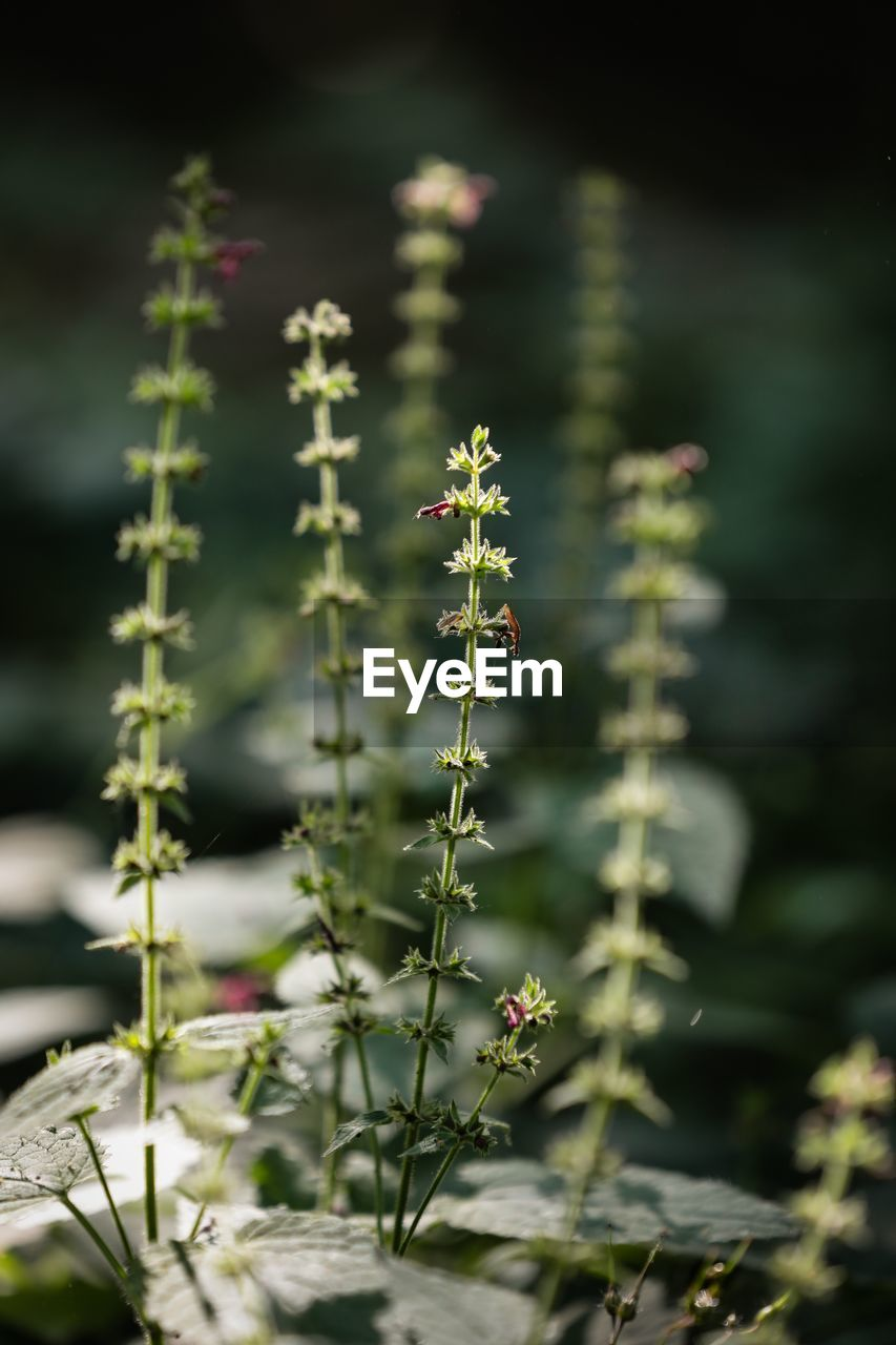 plant, growth, beauty in nature, flower, fragility, flowering plant, selective focus, nature, vulnerability, close-up, freshness, no people, day, focus on foreground, green color, outdoors, tranquility, plant stem, plant part, leaf, flower head