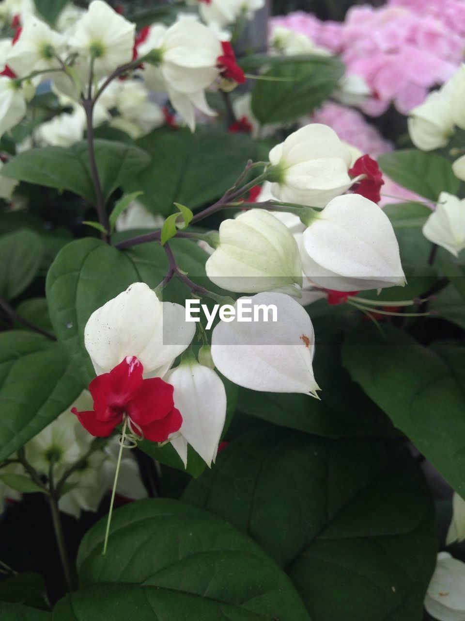 flower, growth, petal, beauty in nature, nature, freshness, leaf, fragility, white color, plant, no people, green color, blooming, outdoors, flower head, close-up, day