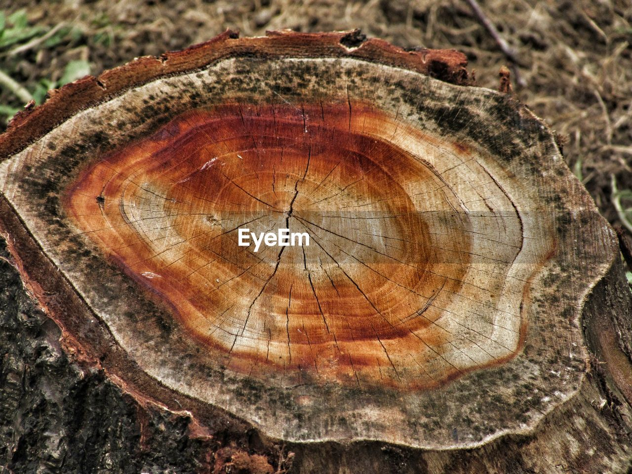 tree ring, close-up, tree, wood - material, tree stump, no people, timber, log, tree trunk, cross section, outdoors, deforestation, textured, day, nature