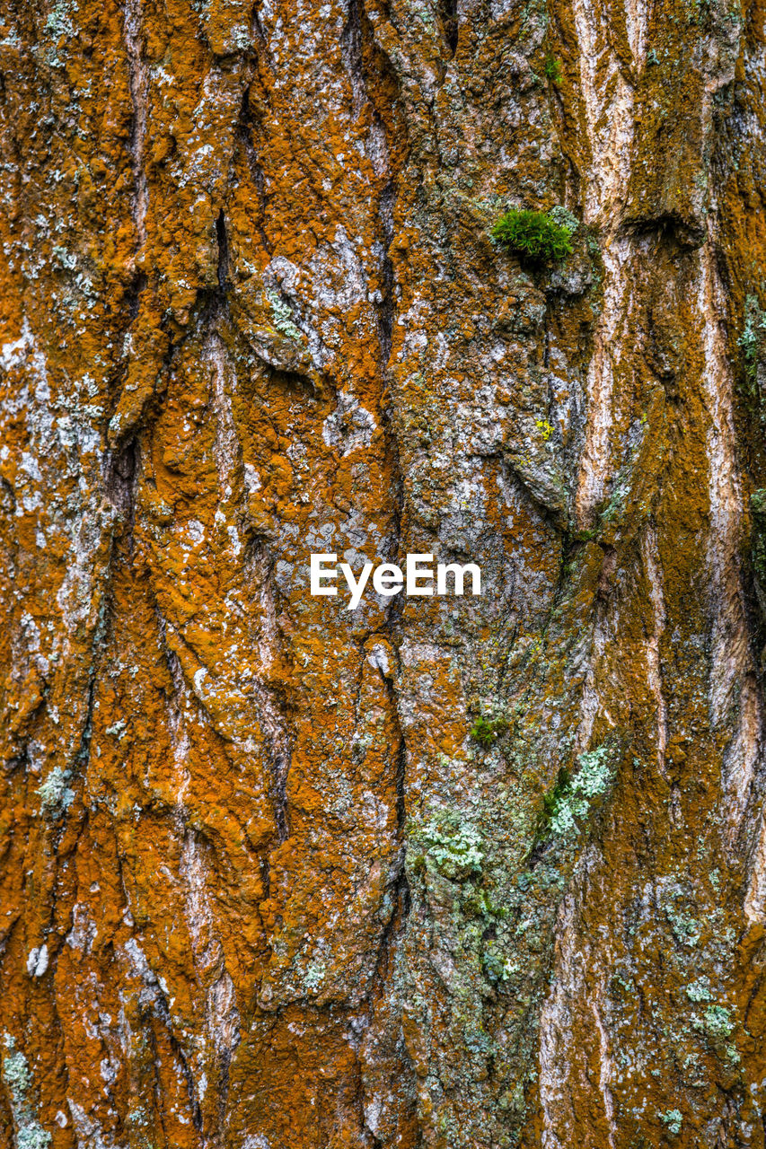 full frame, backgrounds, close-up, textured, no people, plant, tree, tree trunk, trunk, nature, natural pattern, day, rock, outdoors, wood - material, rough, solid, rock - object, pattern, growth, lichen