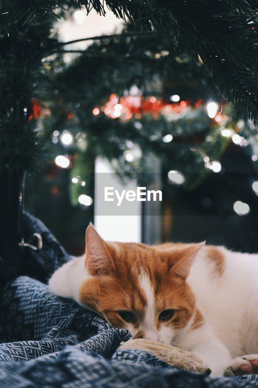 Close-Up Of Cat On Relaxing Underneath Christmas Tree