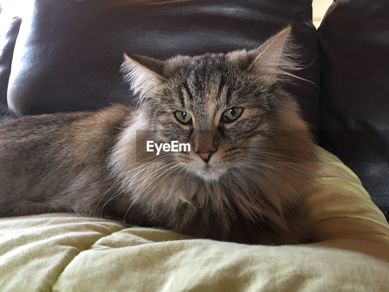 domestic, pets, domestic animals, cat, animal themes, mammal, animal, one animal, domestic cat, feline, vertebrate, furniture, indoors, looking at camera, relaxation, portrait, bed, no people, whisker, close-up