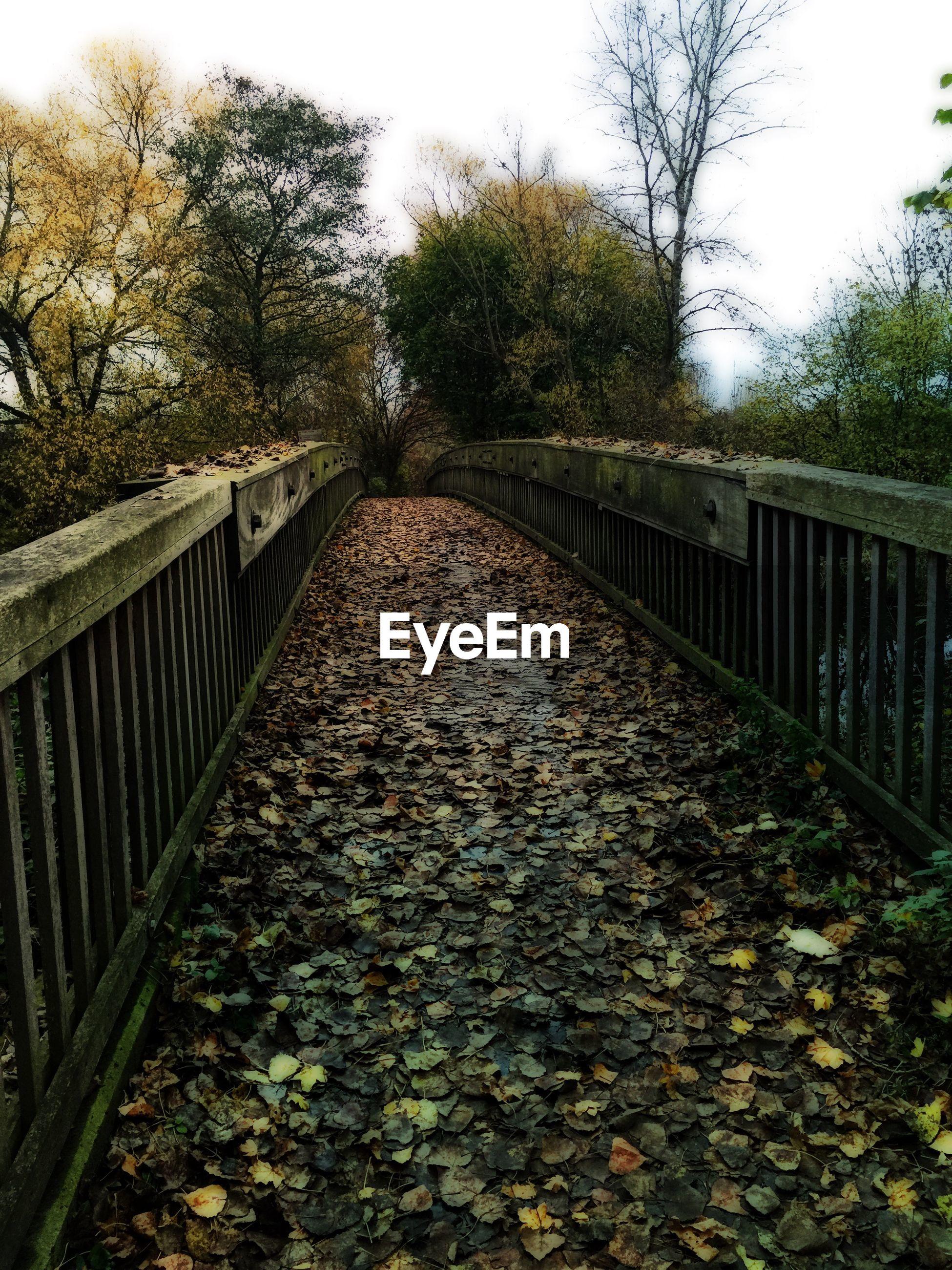 Autumn leaves on footbridge against sky