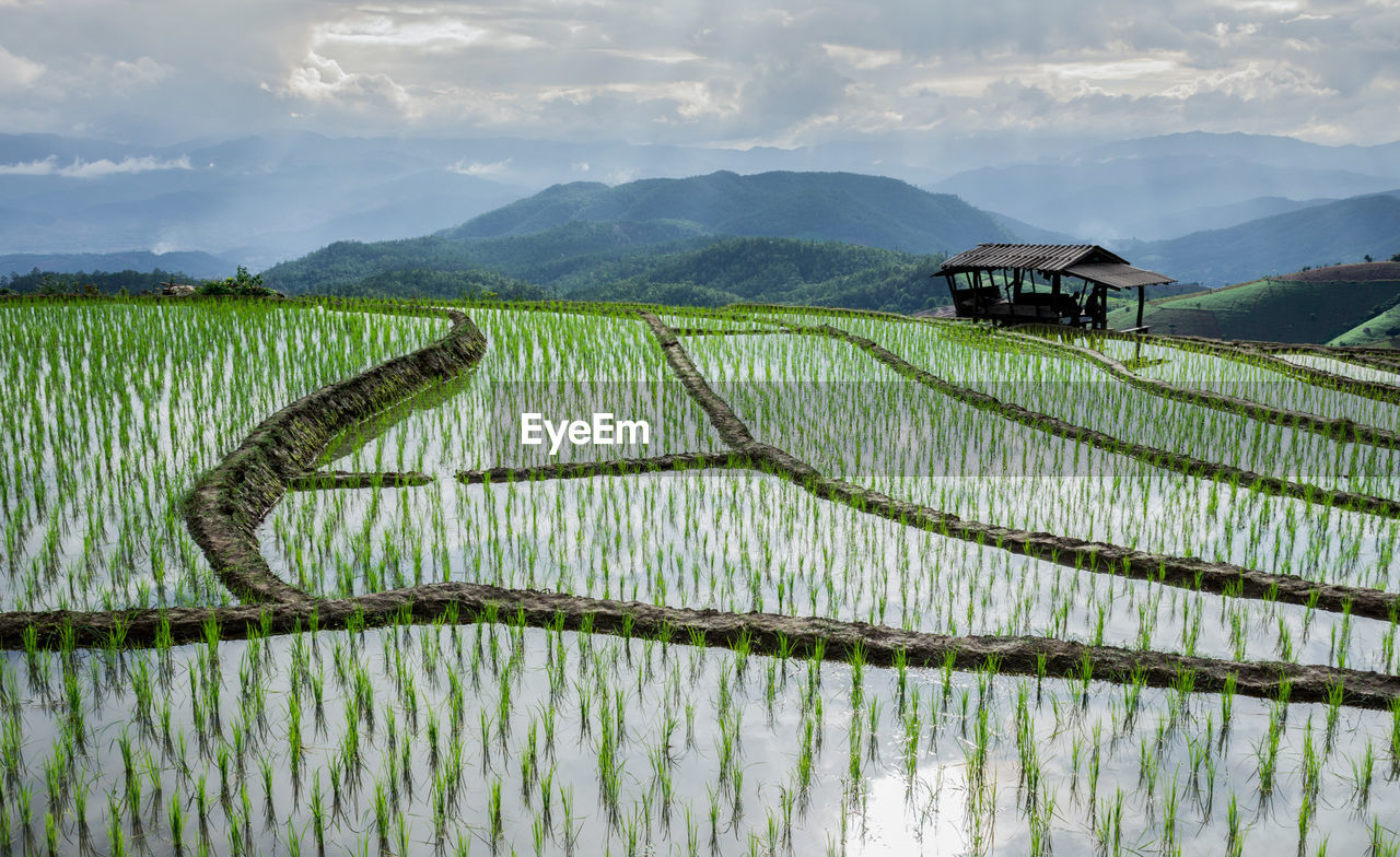 Scenic View Of Rice Field By Mountains Against Sky