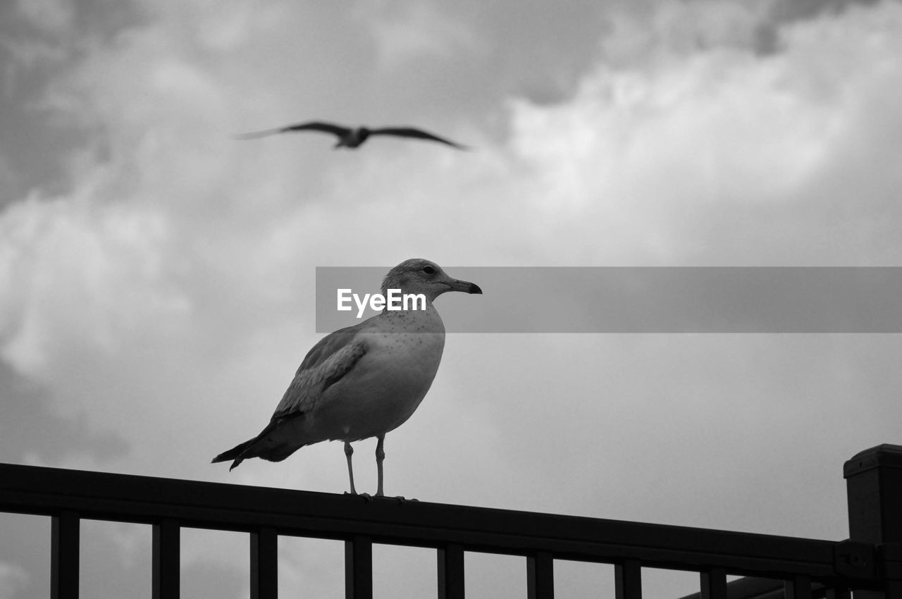Low angle view of seagull perched on railing