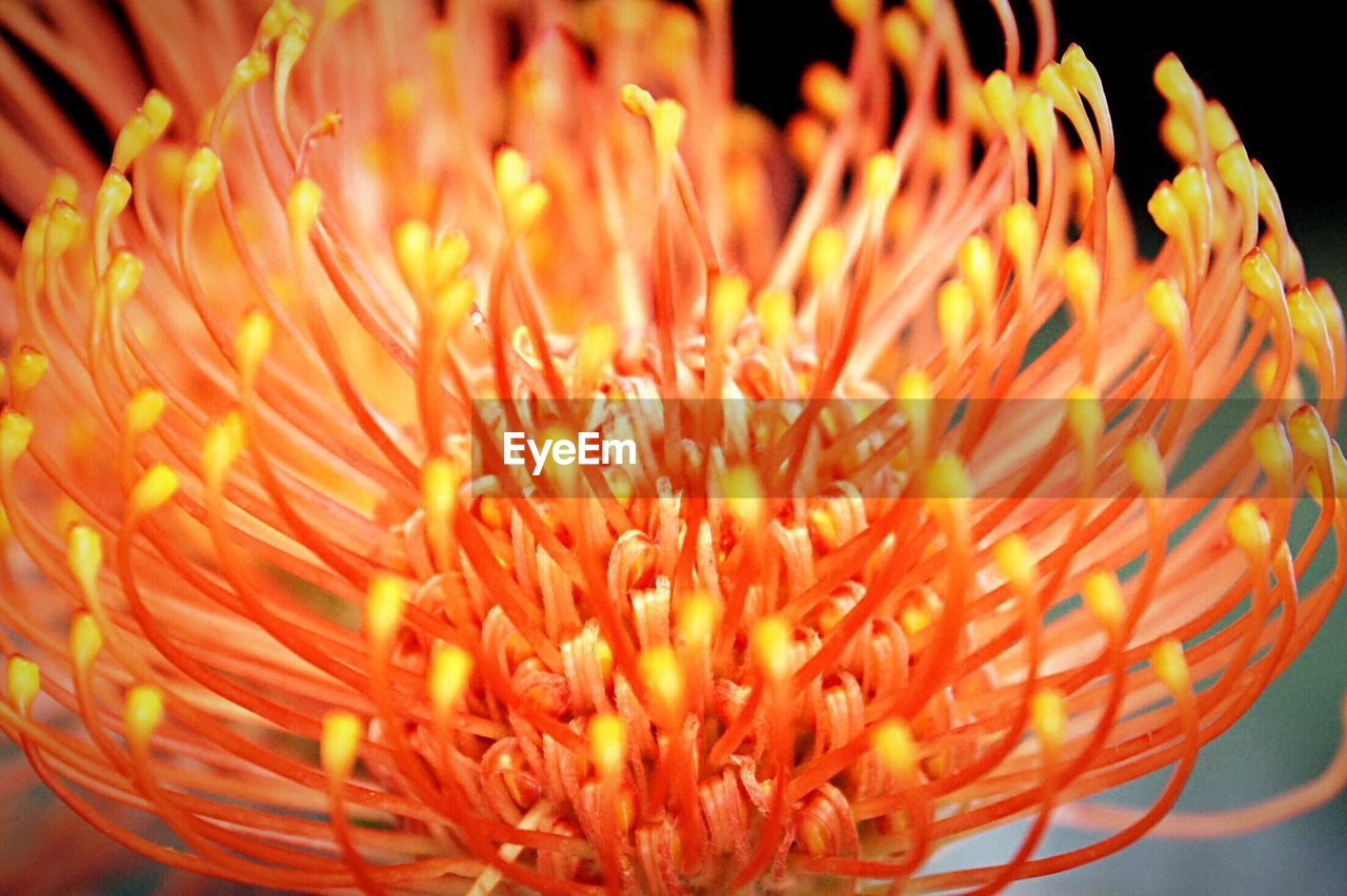 flower, beauty in nature, fragility, flower head, freshness, petal, nature, growth, close-up, plant, no people, outdoors, day, blooming