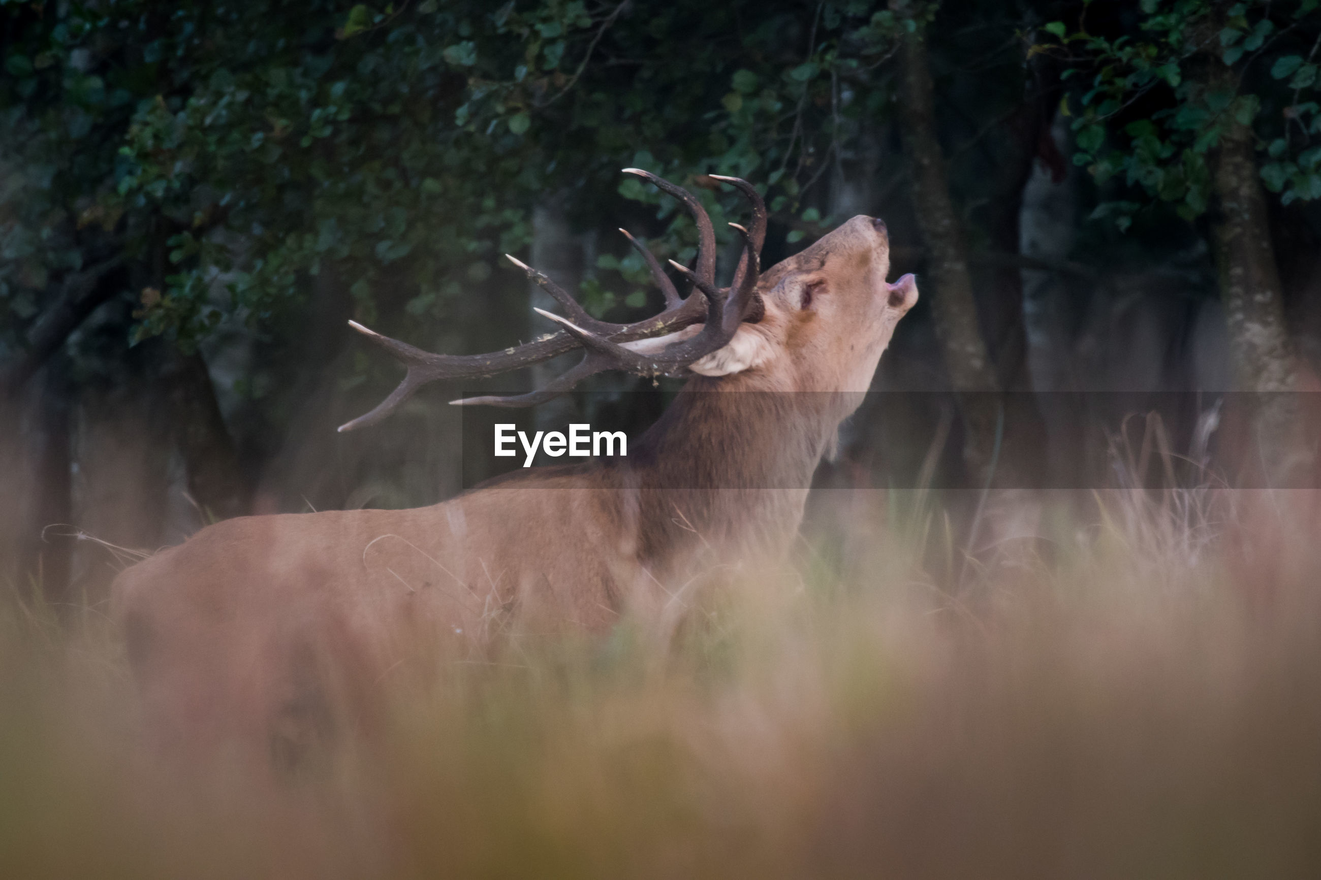 Side view of deer standing amidst plants in forest