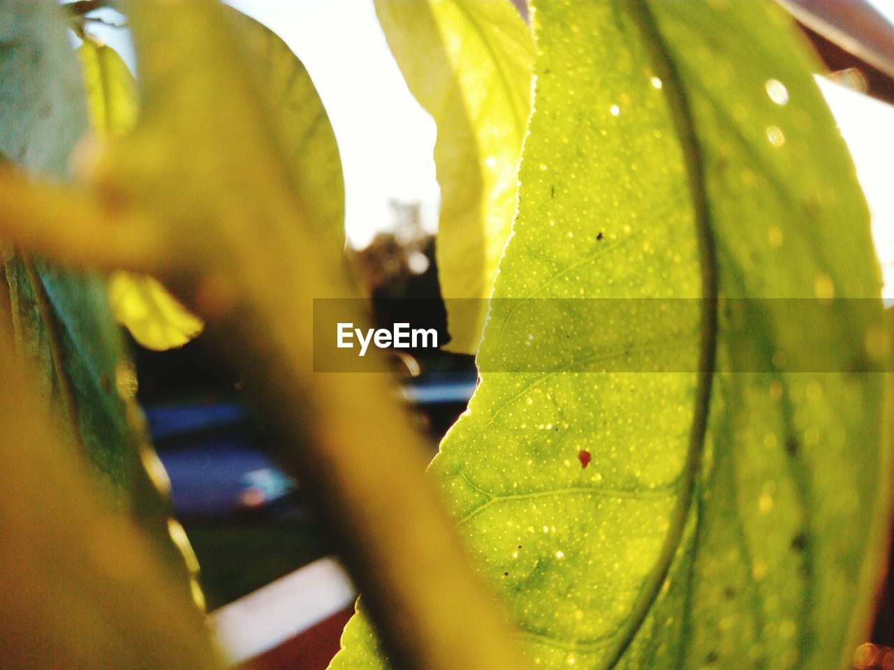 selective focus, leaf, green color, close-up, nature, day, no people, outdoors, sunlight, growth, beauty in nature, water, freshness