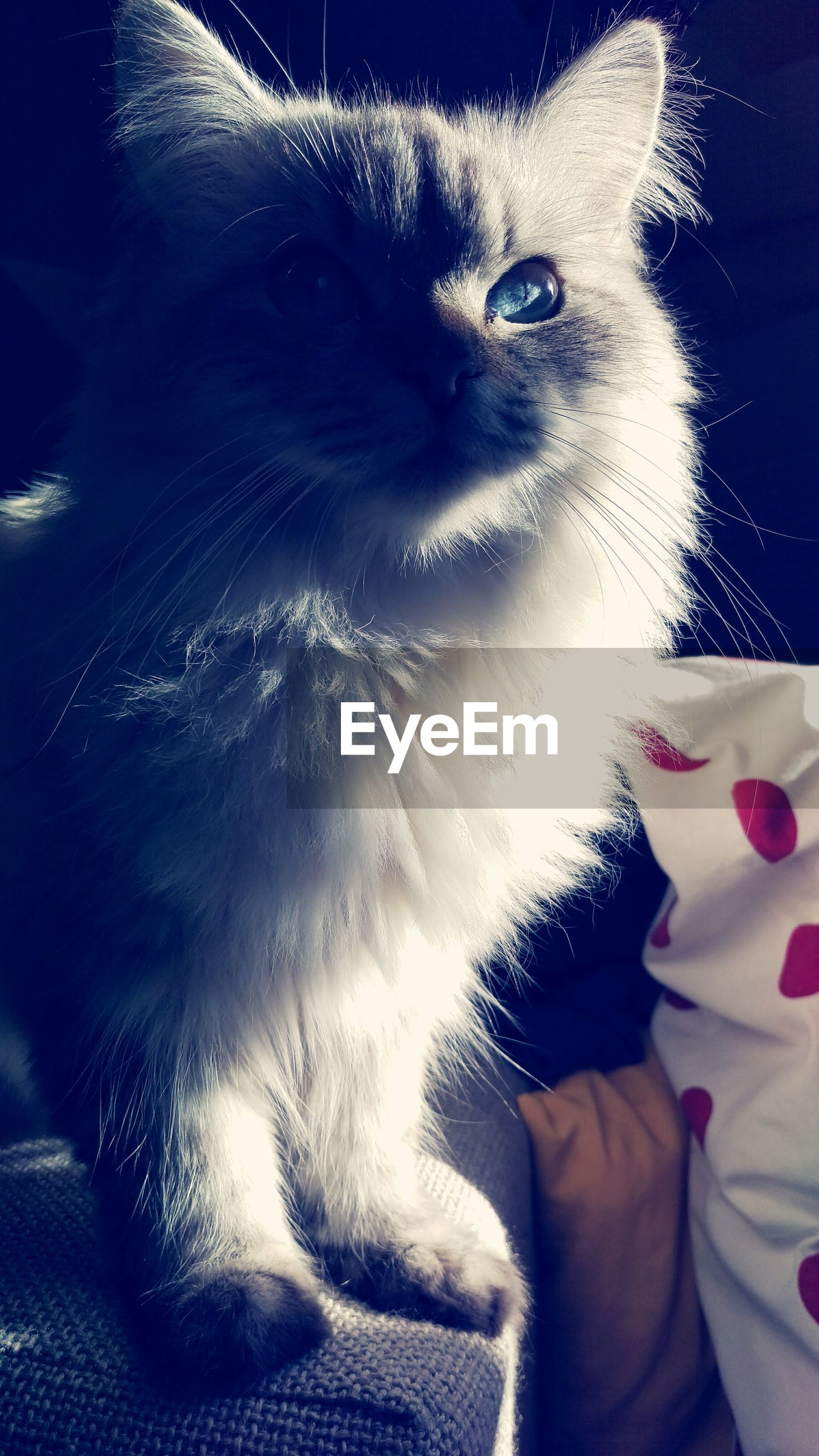 pets, domestic animals, one animal, indoors, animal themes, mammal, domestic cat, lifestyles, part of, personal perspective, dog, cat, pet owner, leisure activity, close-up, person, unrecognizable person