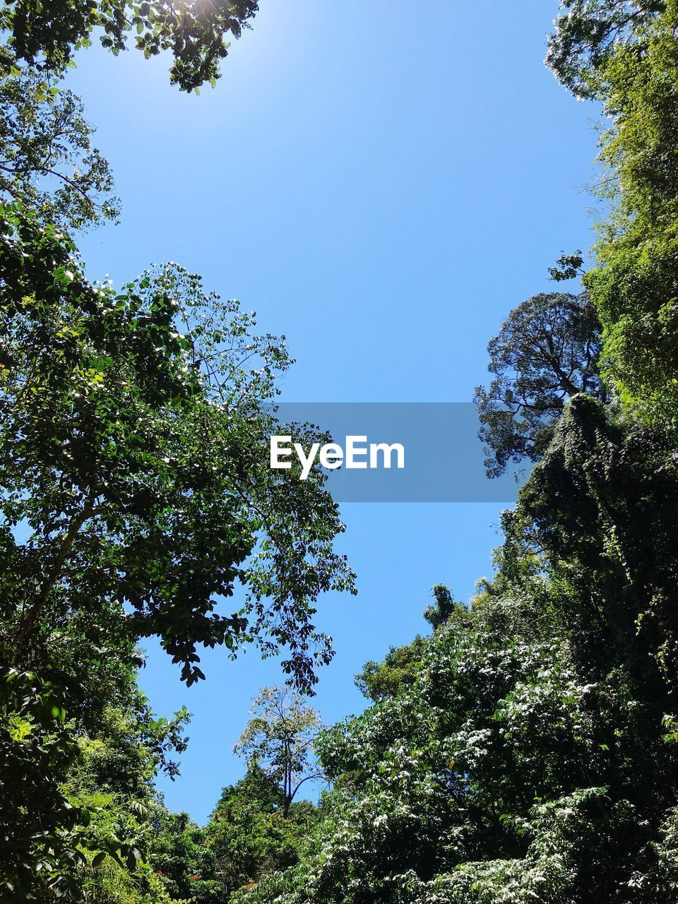 tree, plant, sky, low angle view, growth, nature, beauty in nature, clear sky, day, tranquility, no people, green color, blue, outdoors, sunlight, forest, scenics - nature, sunny, land, green, high, tree canopy