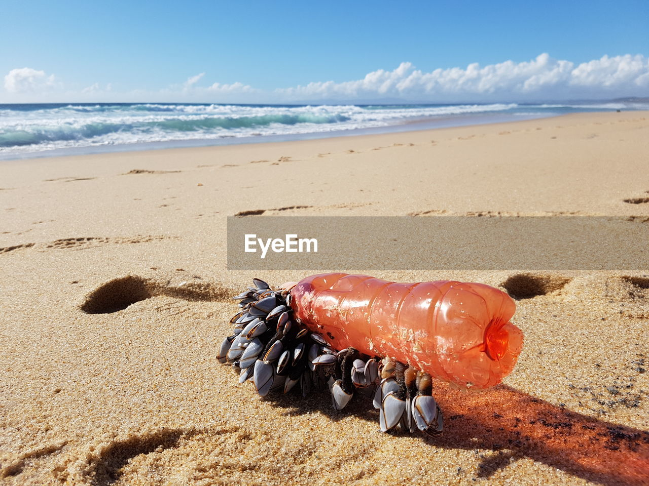 High Angle View Of Bottle With Mussel At Beach