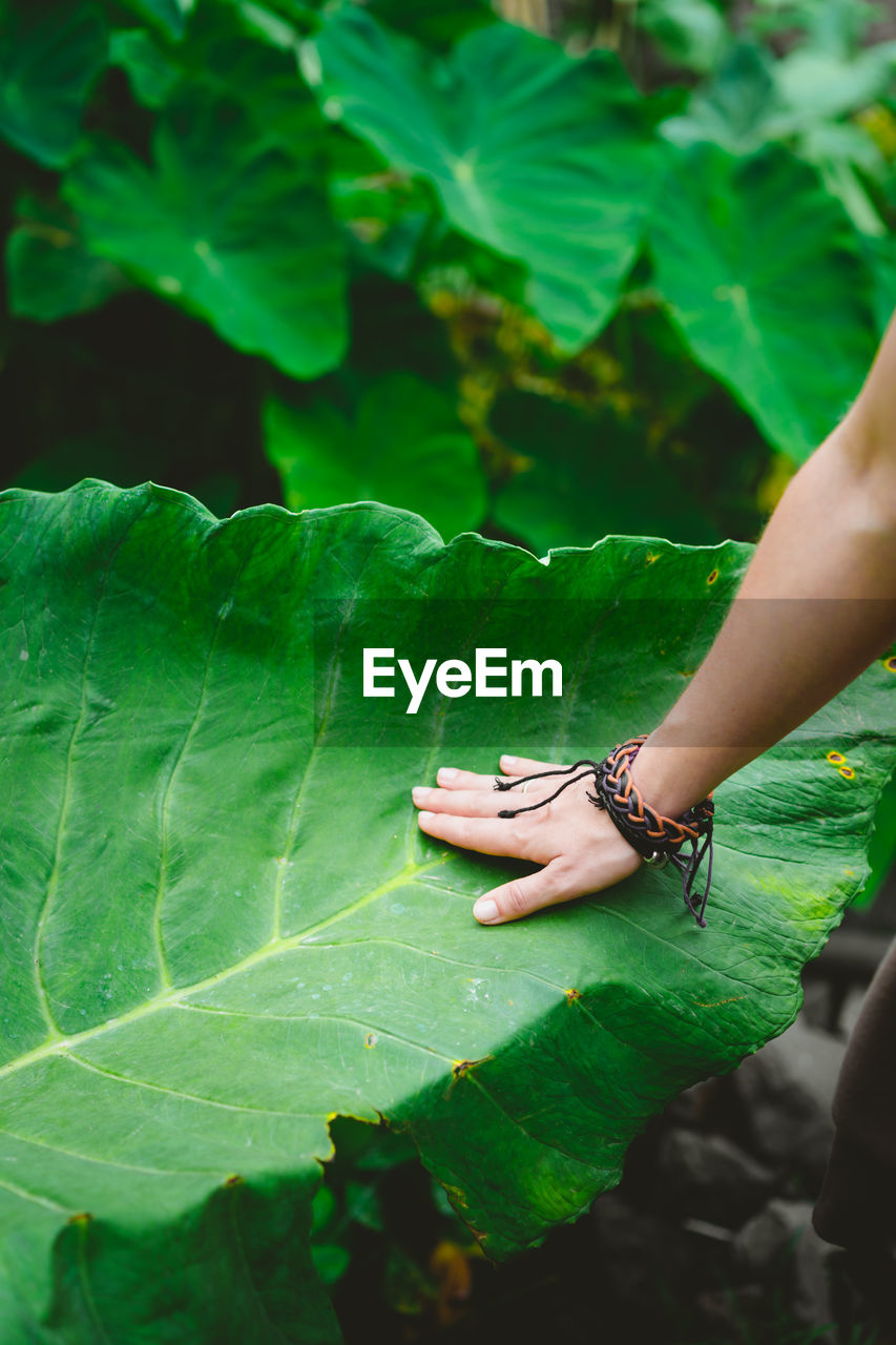 Cropped Hand Of Woman Touching Leaf