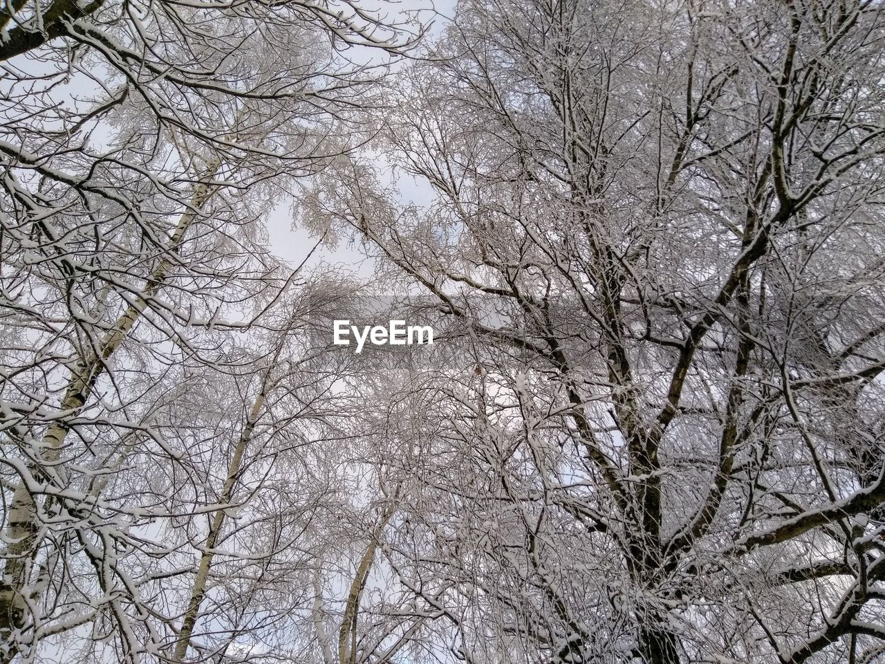 tree, winter, snow, branch, plant, cold temperature, bare tree, no people, nature, low angle view, tranquility, beauty in nature, day, full frame, land, white color, sky, frozen, backgrounds, outdoors, extreme weather, woodland, snowing, blizzard, tree canopy
