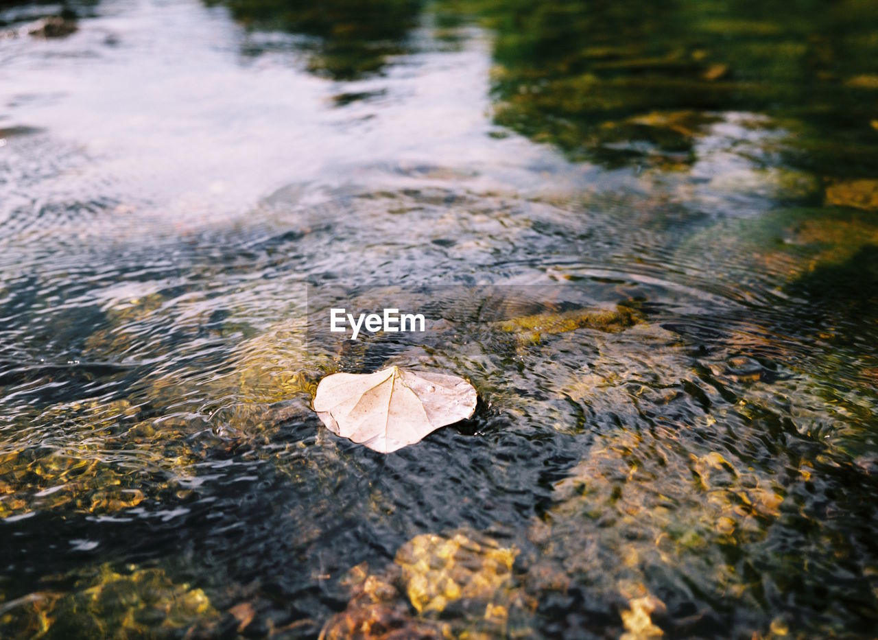 water, leaf, nature, autumn, beauty in nature, change, outdoors, day, tranquility, no people, floating on water, lake, fragility, wet, close-up, scenics, lily pad
