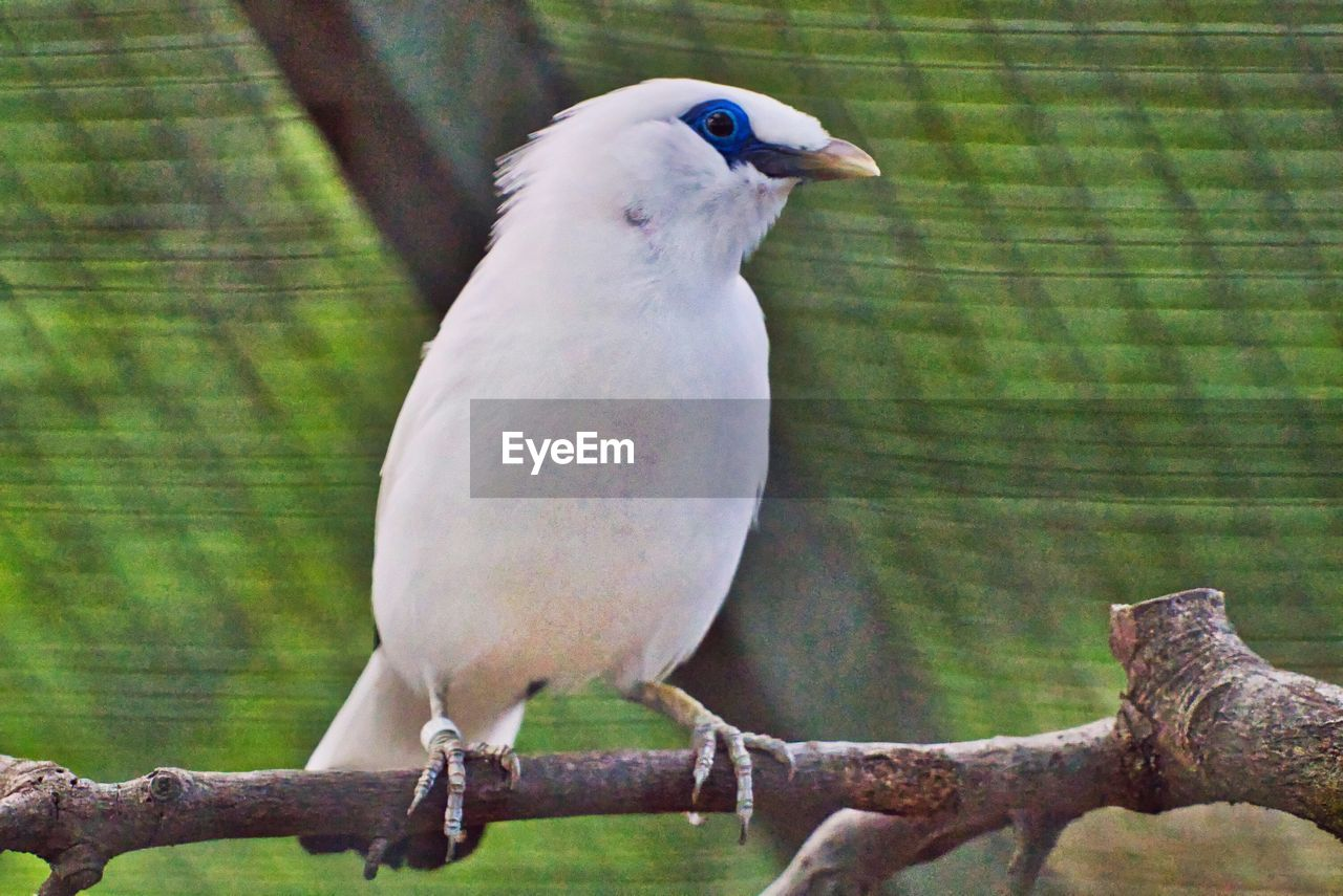 vertebrate, bird, animal, animal themes, perching, one animal, animal wildlife, animals in the wild, no people, focus on foreground, parrot, tree, branch, full length, day, close-up, nature, wood - material, outdoors, animals in captivity