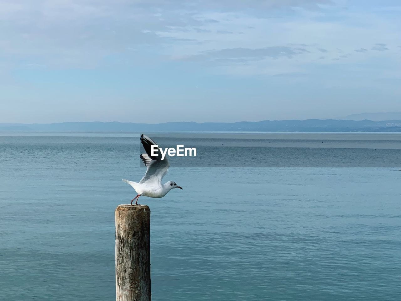 animals in the wild, animal wildlife, water, animal themes, animal, vertebrate, bird, sea, sky, beauty in nature, one animal, scenics - nature, day, seagull, nature, perching, cloud - sky, tranquil scene, no people, horizon over water, wooden post, post