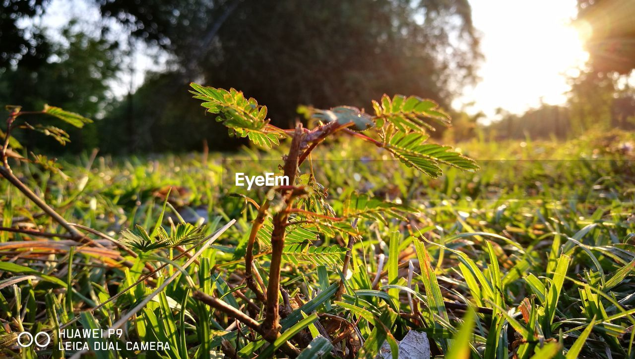 growth, nature, no people, focus on foreground, green color, outdoors, beauty in nature, day, grass, tree, plant, close-up, fragility, freshness