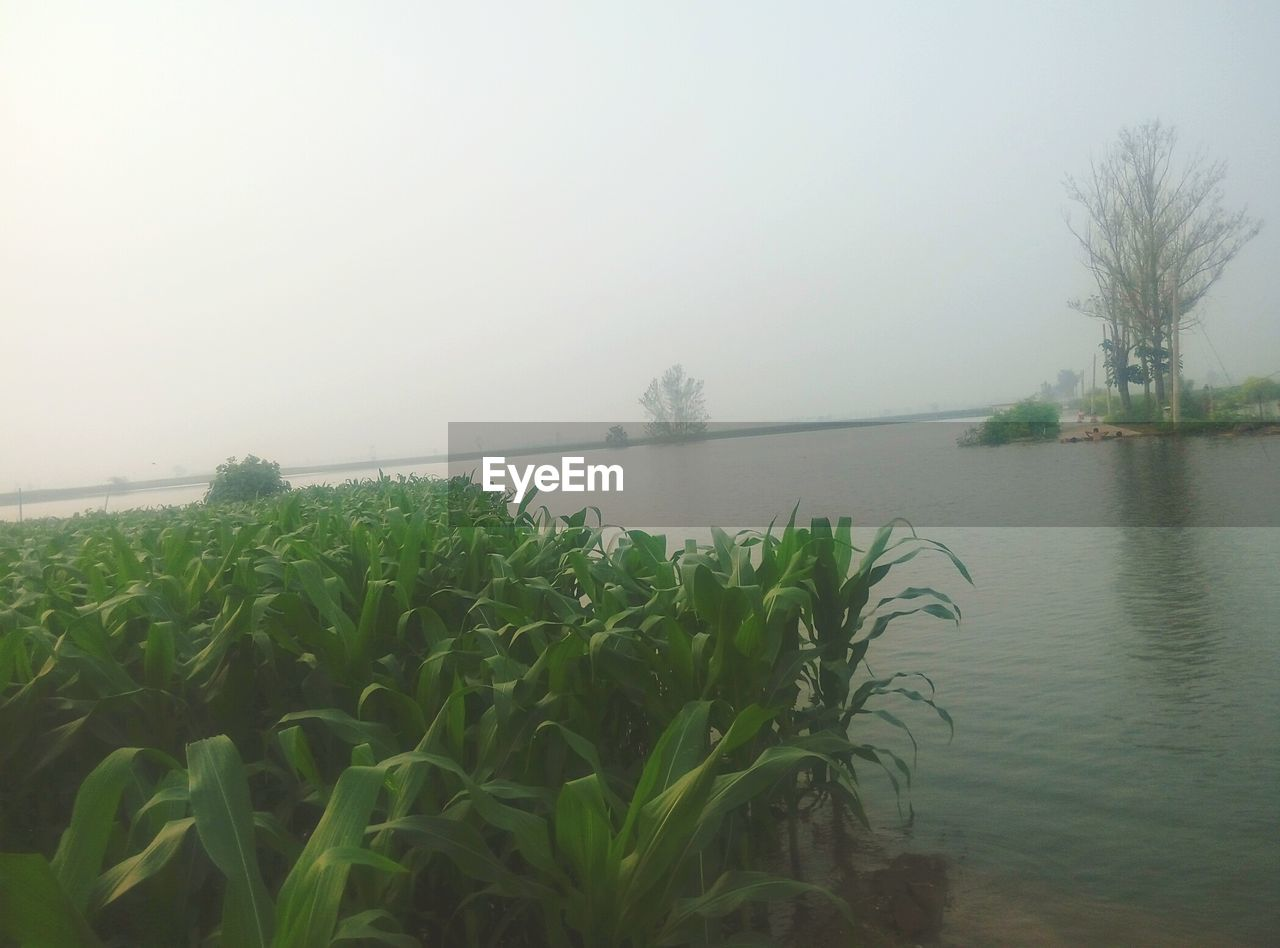 nature, beauty in nature, growth, tranquil scene, tranquility, fog, scenics, plant, outdoors, no people, water, agriculture, day, tree, landscape, sky