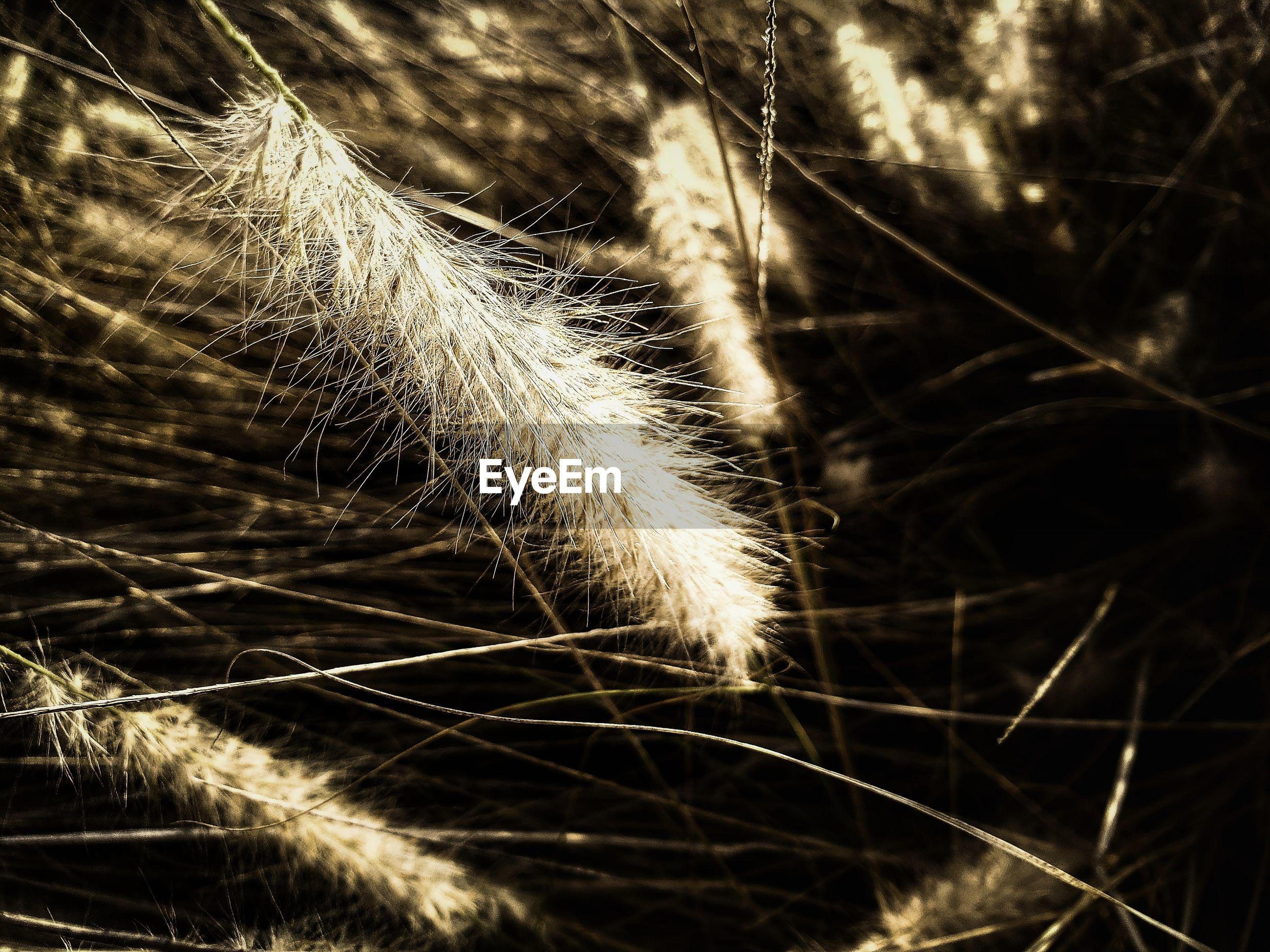 Macro shot of wheat growing in field