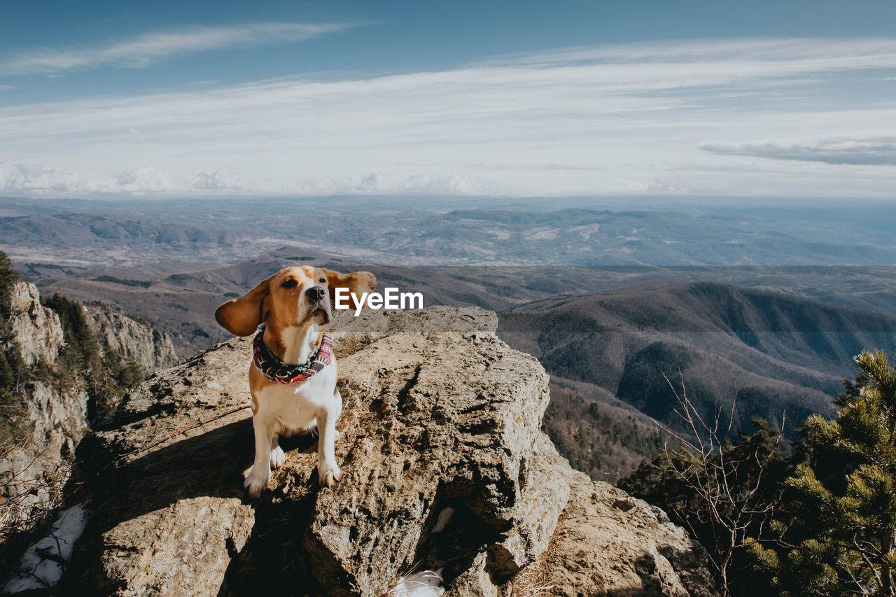Dog sitting on rock against landscape