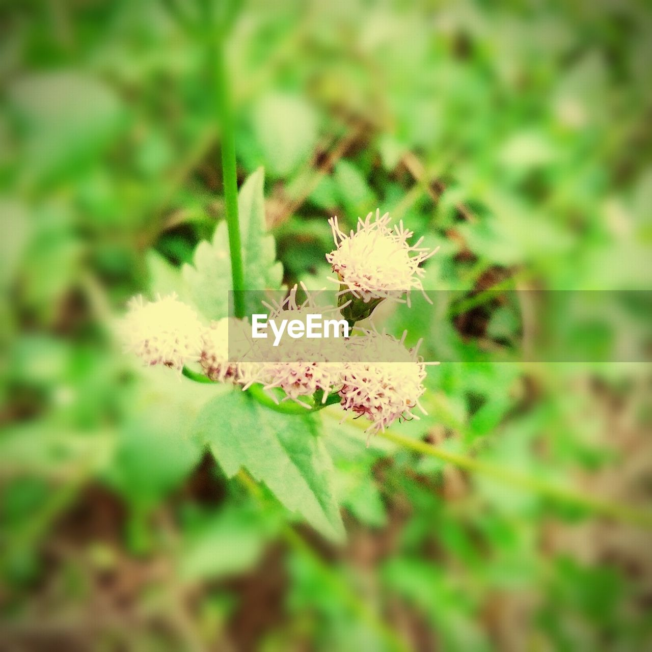 flower, nature, growth, green color, fragility, beauty in nature, no people, plant, day, flower head, close-up, outdoors, springtime, freshness