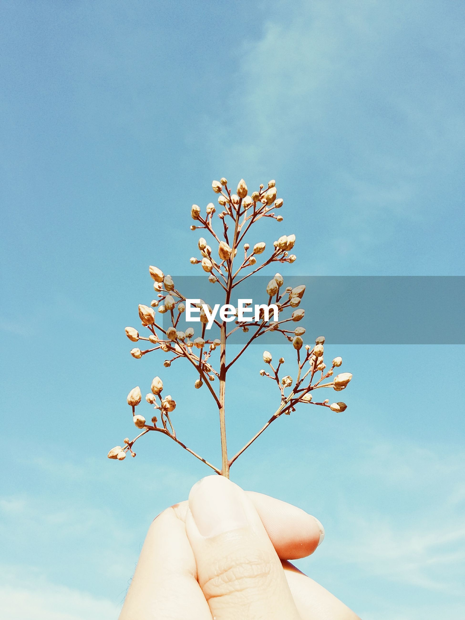 Cropped hand holding flower buds against sky