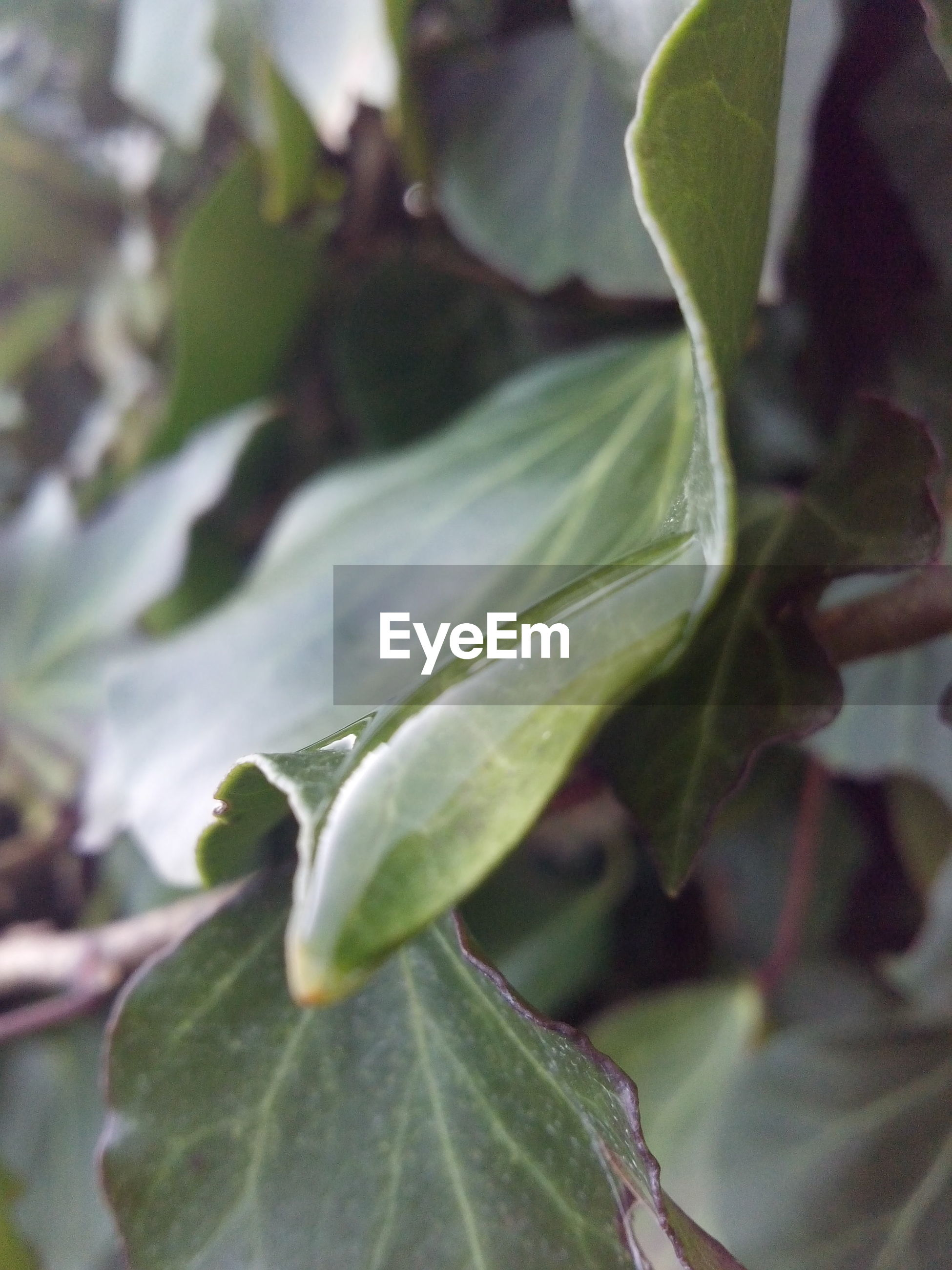 leaf, close-up, focus on foreground, growth, green color, plant, nature, freshness, selective focus, beauty in nature, new life, day, stem, outdoors, beginnings, no people, bud, branch, fragility, green