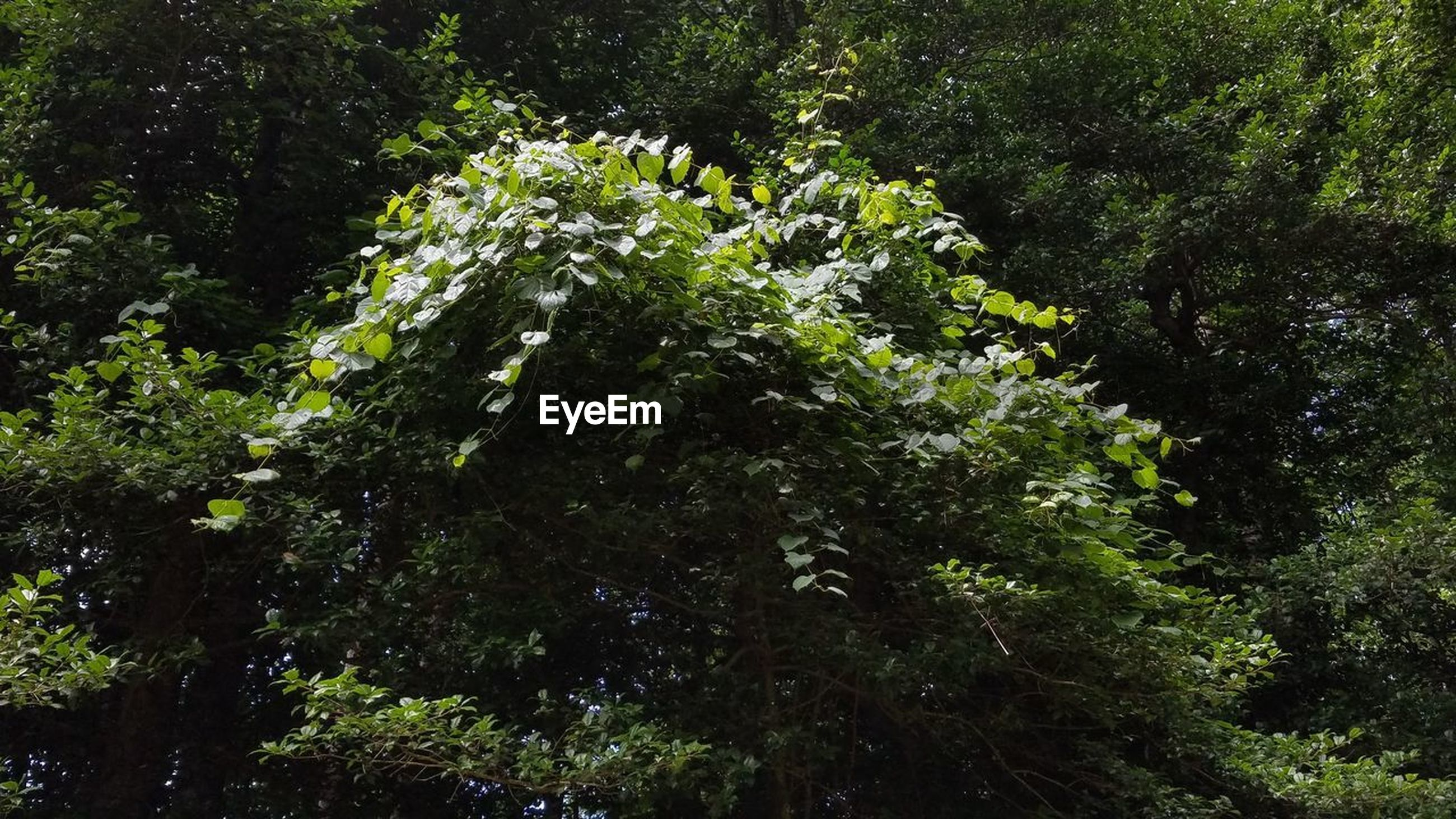 plant, tree, green, forest, growth, nature, natural environment, woodland, vegetation, rainforest, leaf, sunlight, beauty in nature, flower, no people, jungle, day, tranquility, foliage, lush foliage, branch, outdoors, low angle view, land, old-growth forest, garden