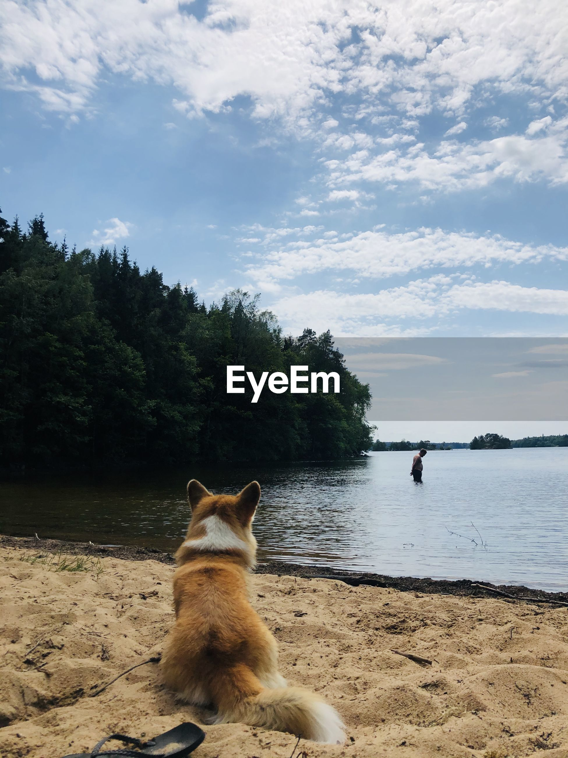 VIEW OF DOG ON SHORE