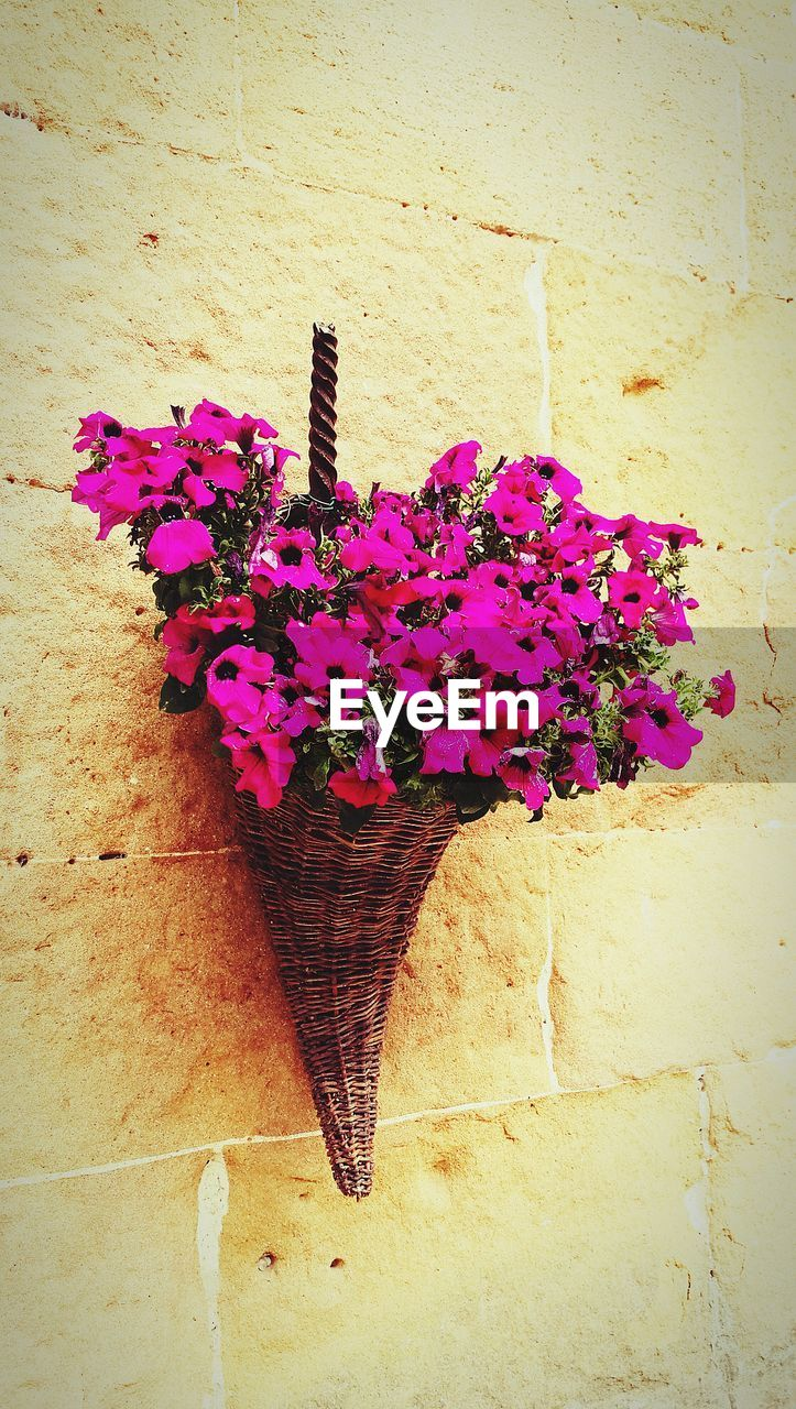 flower, fragility, freshness, nature, beauty in nature, no people, growth, flower head, plant, day, outdoors, petal, architecture, pink color, close-up, building exterior, built structure, blooming, window box