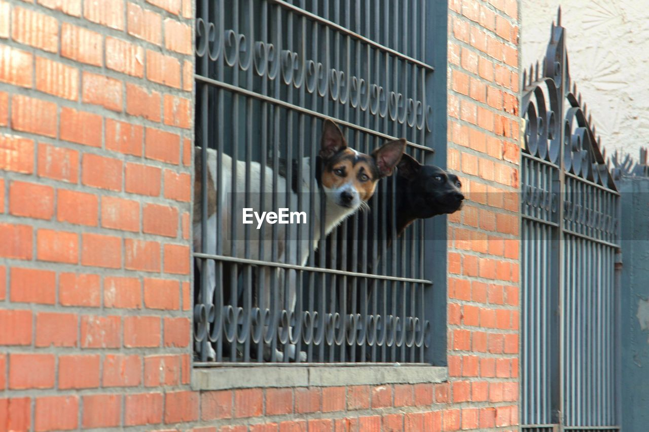 Dogs looking though window amidst railing
