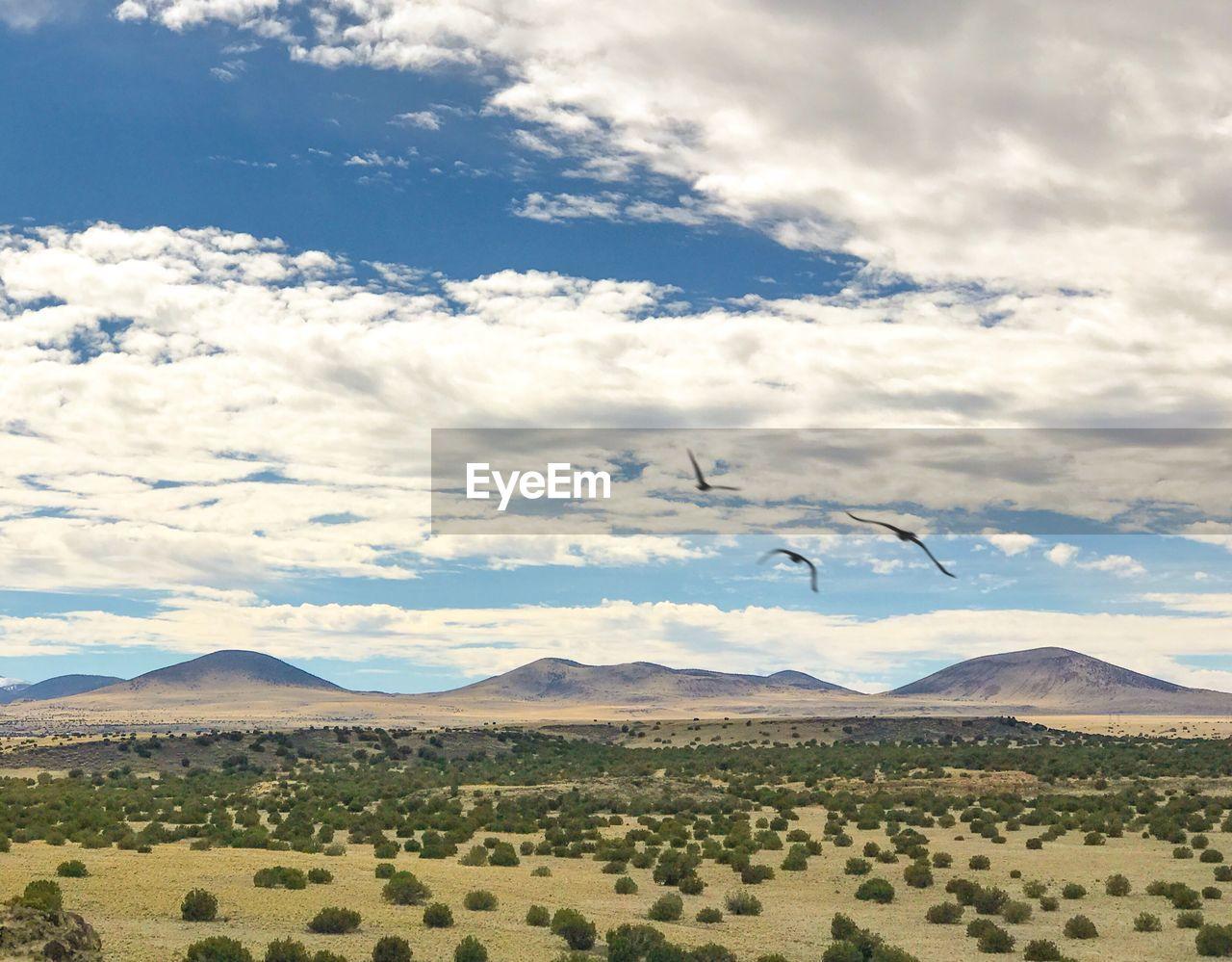 Birds flying over landscape against sky
