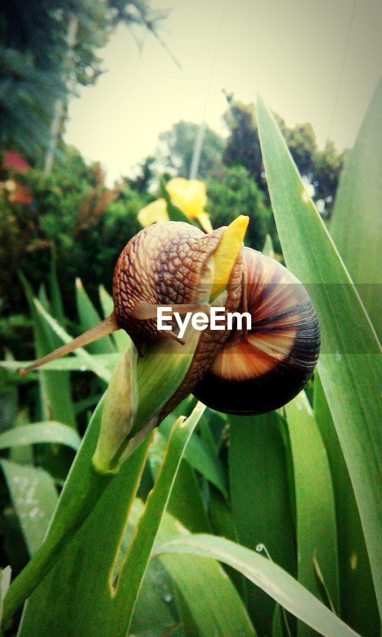 one animal, snail, animal themes, nature, no people, fragility, plant, leaf, animals in the wild, close-up, day, outdoors, growth, beauty in nature, freshness