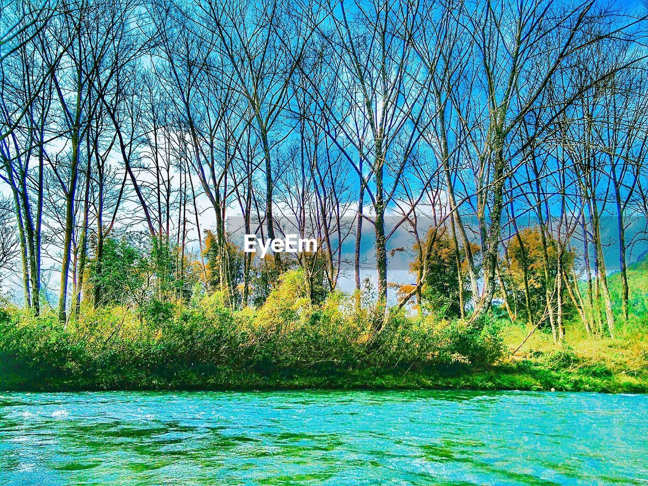 tree, nature, tranquil scene, beauty in nature, tranquility, scenics, forest, water, bare tree, non-urban scene, outdoors, day, green color, no people, river, branch, growth, landscape, grass, clear sky, sky