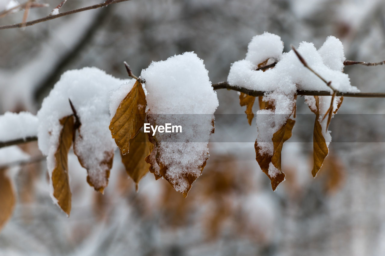 winter, cold temperature, snow, weather, frozen, white color, nature, ice, frost, outdoors, close-up, focus on foreground, tranquility, day, icicle, beauty in nature, no people