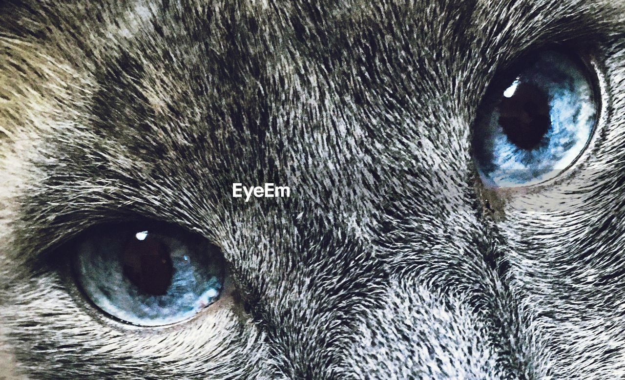 domestic cat, one animal, pets, animal themes, domestic animals, looking at camera, feline, animal eye, portrait, mammal, cat, animal head, close-up, whisker, no people, yellow eyes, full frame, eyesight, indoors, iris - eye, day, nature, eyeball