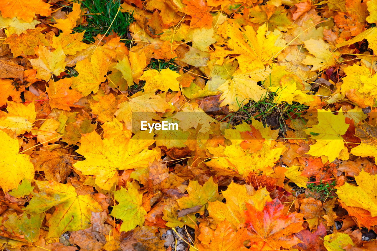 yellow, autumn, plant part, leaf, backgrounds, full frame, change, no people, high angle view, nature, day, maple leaf, beauty in nature, orange color, leaves, vulnerability, flower, abundance, plant, fragility, outdoors, natural condition