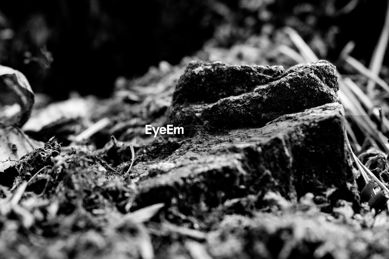 selective focus, close-up, no people, nature, plant, day, tree, land, textured, outdoors, plant part, moss, field, growth, dirt, forest, leaf, rough, wood - material, focus on foreground, bark