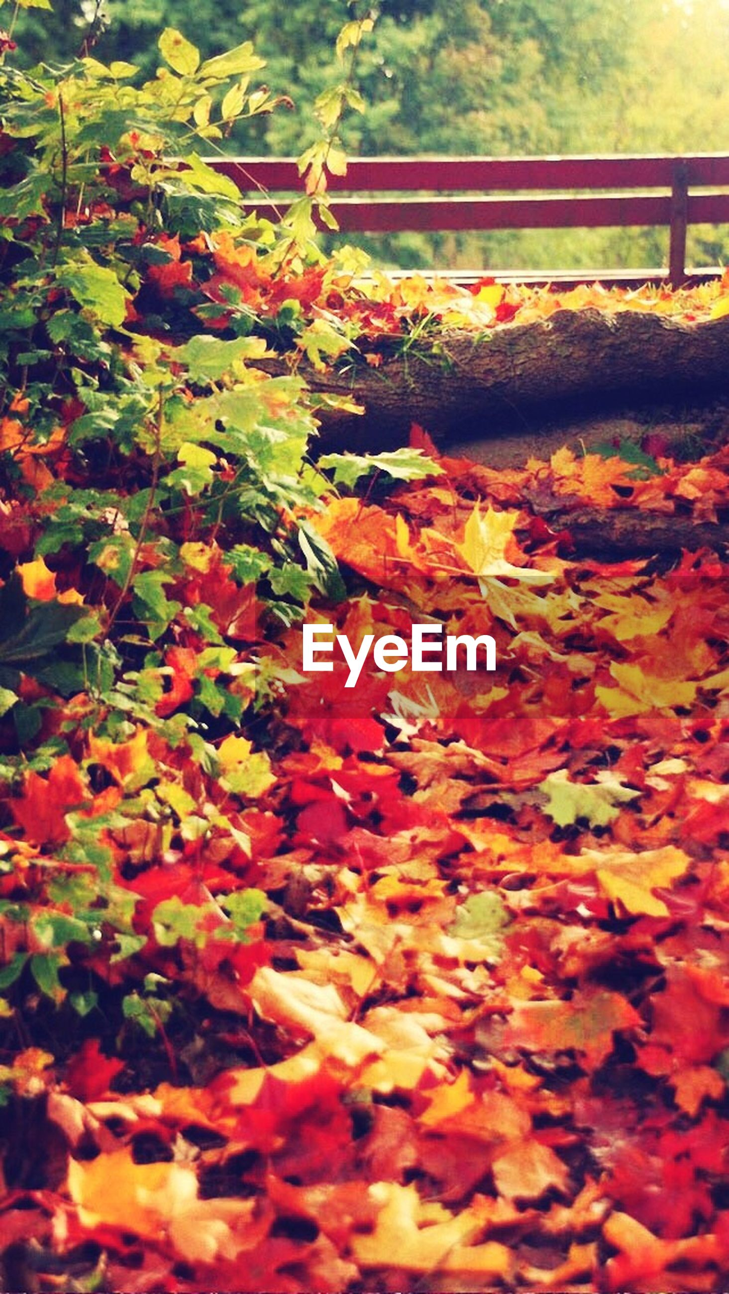 autumn, change, leaf, season, orange color, leaves, nature, growth, flower, beauty in nature, fallen, red, freshness, plant, abundance, fragility, day, dry, outdoors, no people