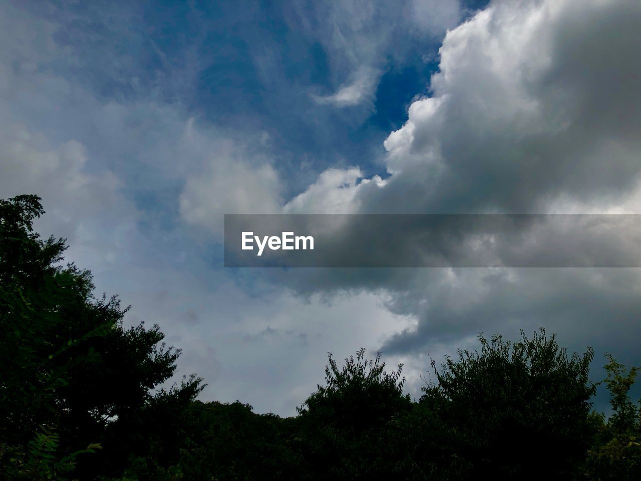 cloud - sky, sky, tree, beauty in nature, plant, low angle view, tranquility, tranquil scene, no people, scenics - nature, nature, day, outdoors, non-urban scene, growth, treetop, overcast, dramatic sky, idyllic, ominous